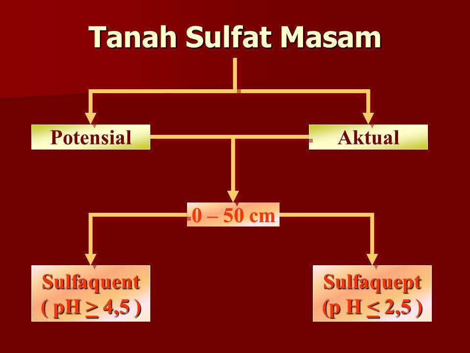 Tanah Sulfat Masam AktualPotensial Sulfaquent ( pH > 4,5 ) Sulfaquept (p H < 2,5 ) 0 – 50 cm