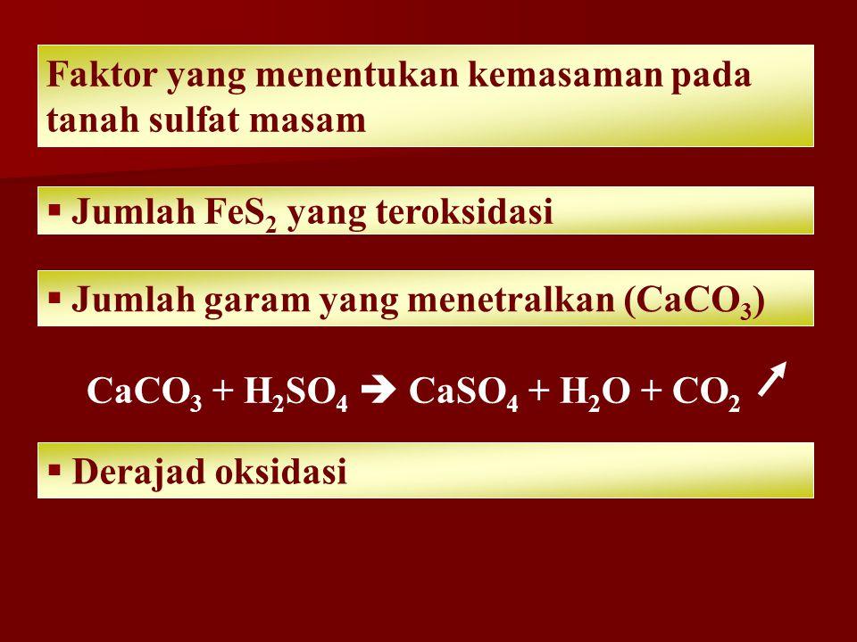 Faktor yang menentukan kemasaman pada tanah sulfat masam  Jumlah FeS 2 yang teroksidasi  Jumlah garam yang menetralkan (CaCO 3 ) CaCO 3 + H 2 SO 4  CaSO 4 + H 2 O + CO 2  Derajad oksidasi
