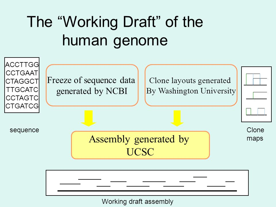 Assembly generated by UCSC Freeze of sequence data generated by NCBI Clone layouts generated By Washington University ACCTTGG CCTGAAT CTAGGCT TTGCATC CCTAGTC CTGATCG sequenceClone maps Working draft assembly The Working Draft of the human genome