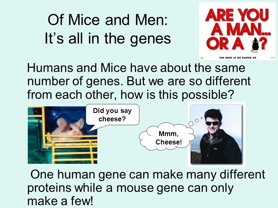 Of Mice and Men: It's all in the genes Humans and Mice have about the same number of genes. But we are so different from each other, how is this possi