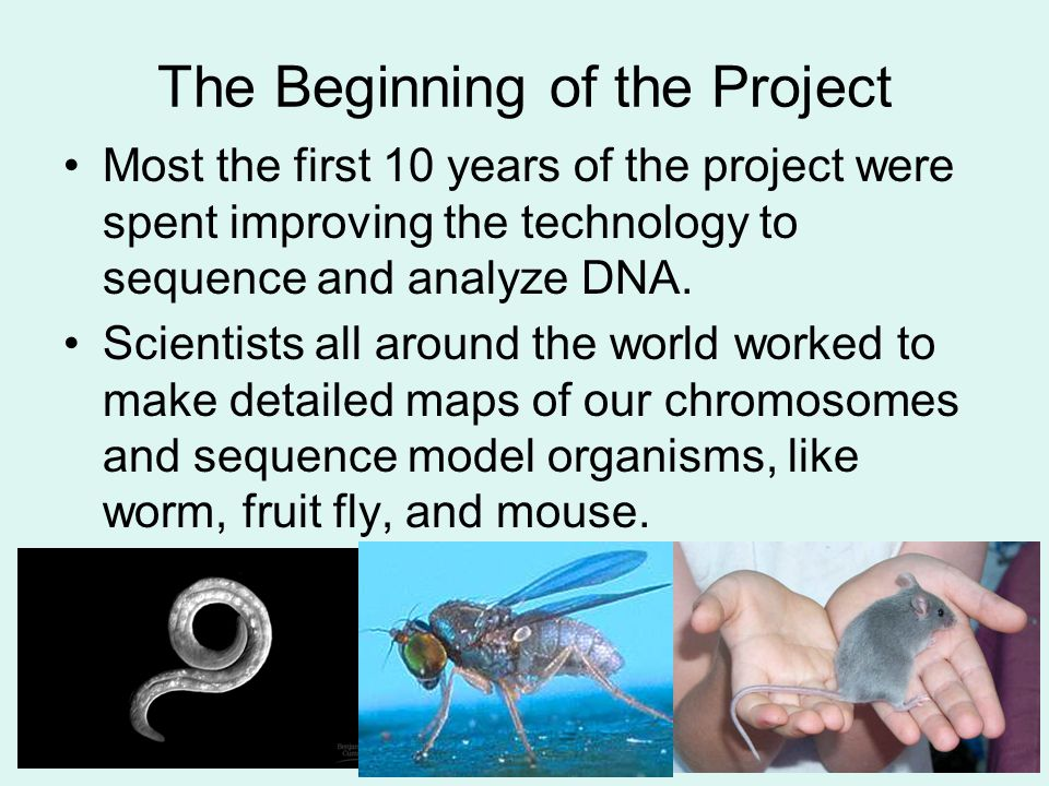 The Beginning of the Project Most the first 10 years of the project were spent improving the technology to sequence and analyze DNA. Scientists all ar