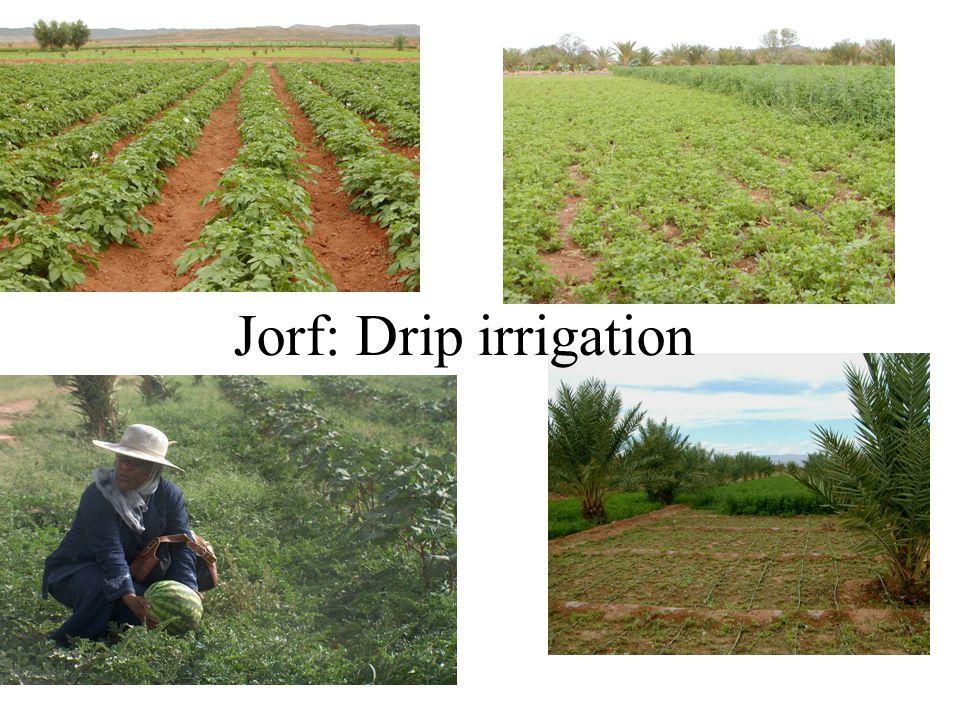 Jorf: Drip irrigation