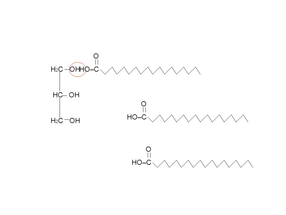 Triacylglyercol H 2 C HC H 2 C O O–C O O–C O O–C H2OH2O H2OH2O H2OH2O Water from Condensation