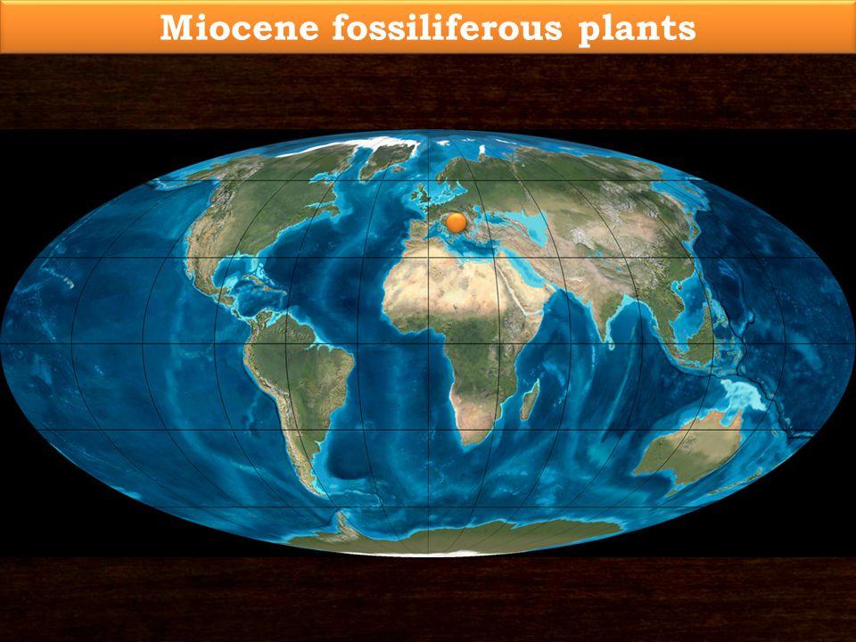 Miocene fossiliferous plants
