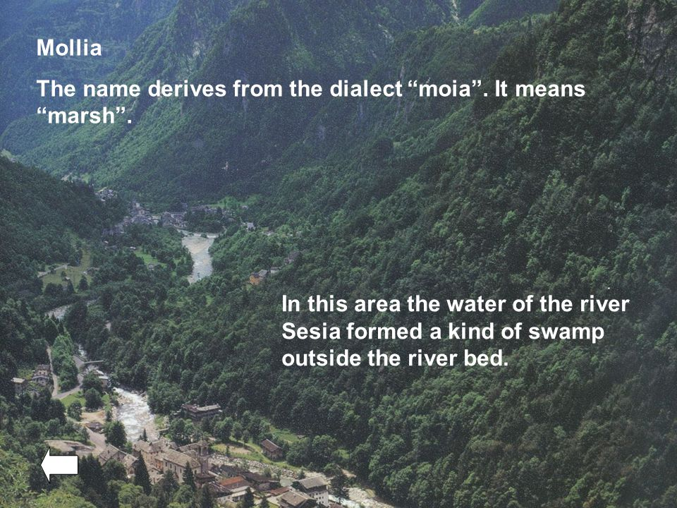 Mollia The name derives from the dialect moia . It means marsh .