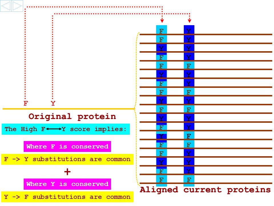 F F F F F F F F F F Y Y Y Y Y F Y Y Y Y F F Y Y Y Y F Y F Y Y Y F F Original protein Aligned current proteins Y F F Y Original protein Aligned current proteins The High F Y score implies: F -> Y substitutions are common + Y -> F substitutions are common Where F is conserved Where Y is conserved