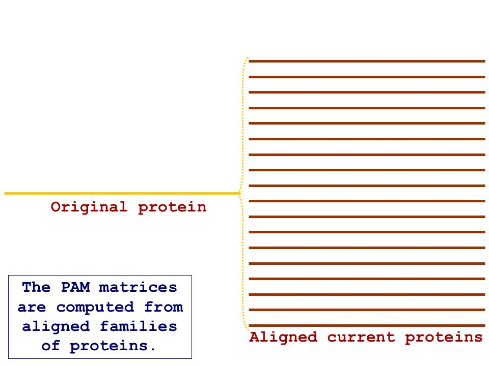 The PAM matrices are computed from aligned families of proteins.
