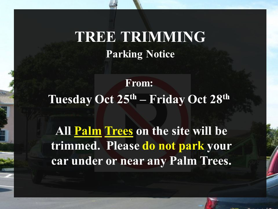 TREE TRIMMING Parking Notice From: Tuesday Oct 25 th – Friday Oct 28 th All Palm Trees on the site will be trimmed. Please do not park your car under