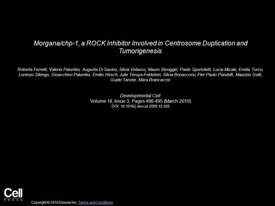 Figure 1 Developmental Cell 2010 18, 486-495DOI: (10.1016/j.devcel.2009.12.020) Copyright © 2010 Elsevier Inc.