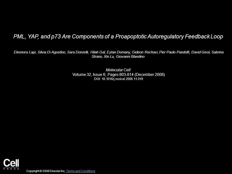 PML, YAP, and p73 Are Components of a Proapoptotic Autoregulatory Feedback Loop Eleonora Lapi, Silvia Di Agostino, Sara Donzelli, Hilah Gal, Eytan Domany, Gideon Rechavi, Pier Paolo Pandolfi, David Givol, Sabrina Strano, Xin Lu, Giovanni Blandino Molecular Cell Volume 32, Issue 6, Pages 803-814 (December 2008) DOI: 10.1016/j.molcel.2008.11.019 Copyright © 2008 Elsevier Inc.