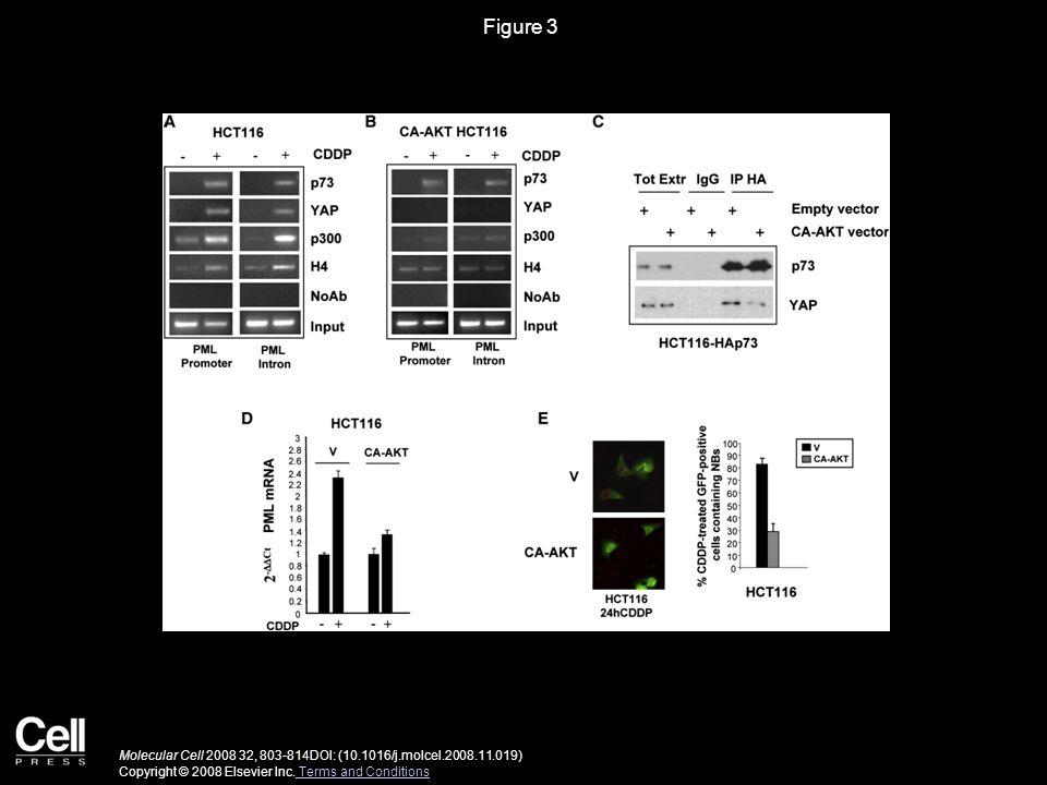 Figure 3 Molecular Cell 2008 32, 803-814DOI: (10.1016/j.molcel.2008.11.019) Copyright © 2008 Elsevier Inc.