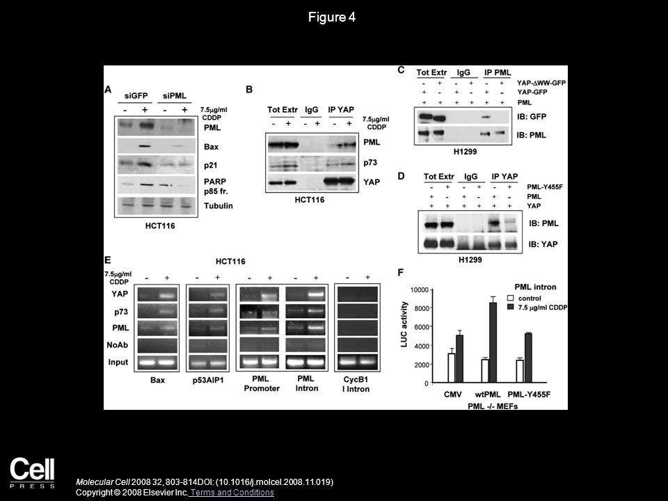 Figure 4 Molecular Cell 2008 32, 803-814DOI: (10.1016/j.molcel.2008.11.019) Copyright © 2008 Elsevier Inc.