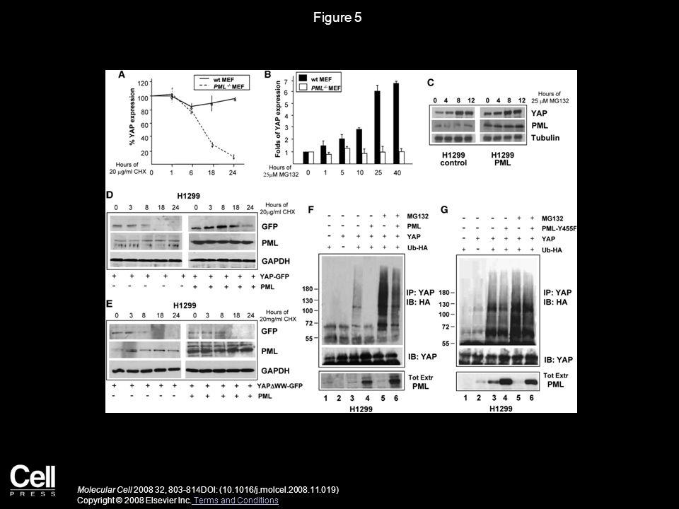 Figure 5 Molecular Cell 2008 32, 803-814DOI: (10.1016/j.molcel.2008.11.019) Copyright © 2008 Elsevier Inc.