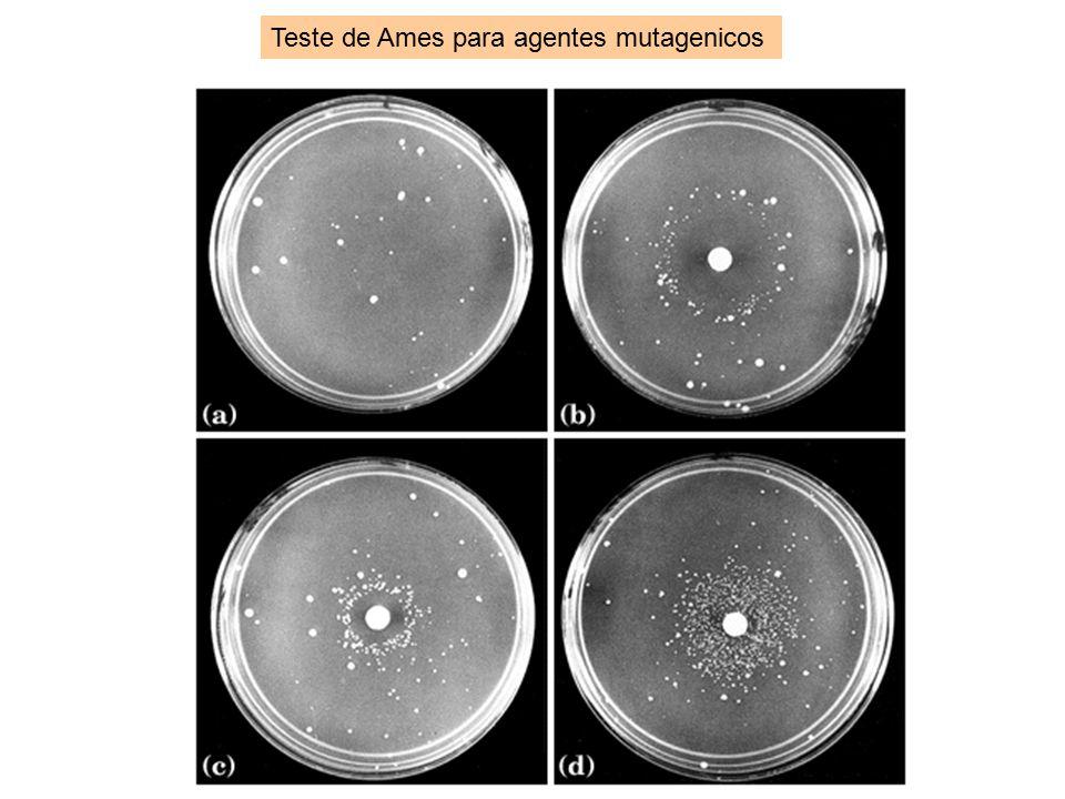 Teste de Ames para agentes mutagenicos