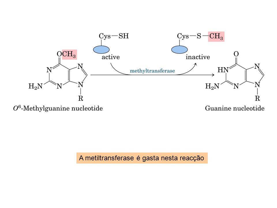 A metiltransferase é gasta nesta reacção