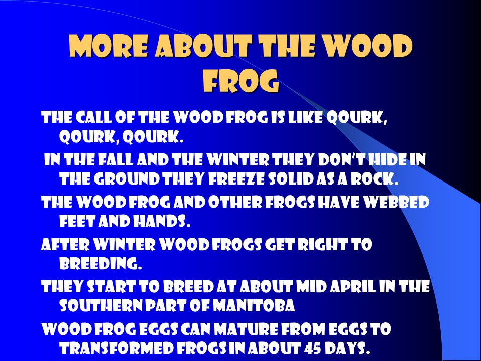 THE WOOD FROG THE WOOD FROG CAN BE UP TO 2 INCHES IN BODY LENGTH. THE WOOD FROG HAS A 50 MM LONG BODY THAT MIGHT REACH 140 MM FROM it's SNOUT TO ITS T