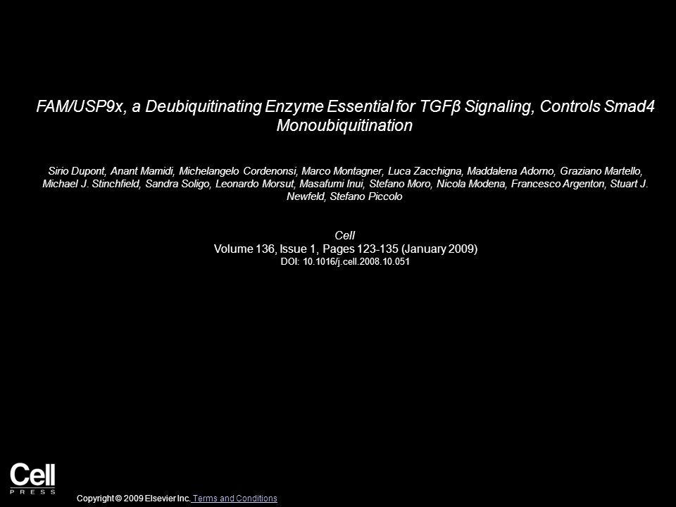 FAM/USP9x, a Deubiquitinating Enzyme Essential for TGFβ Signaling, Controls Smad4 Monoubiquitination Sirio Dupont, Anant Mamidi, Michelangelo Cordenonsi, Marco Montagner, Luca Zacchigna, Maddalena Adorno, Graziano Martello, Michael J.