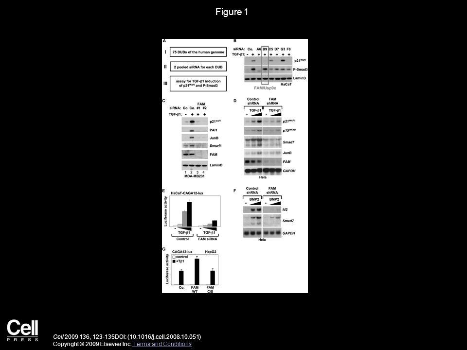 Figure 1 Cell 2009 136, 123-135DOI: (10.1016/j.cell.2008.10.051) Copyright © 2009 Elsevier Inc.