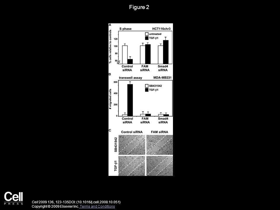 Figure 3 Cell 2009 136, 123-135DOI: (10.1016/j.cell.2008.10.051) Copyright © 2009 Elsevier Inc.