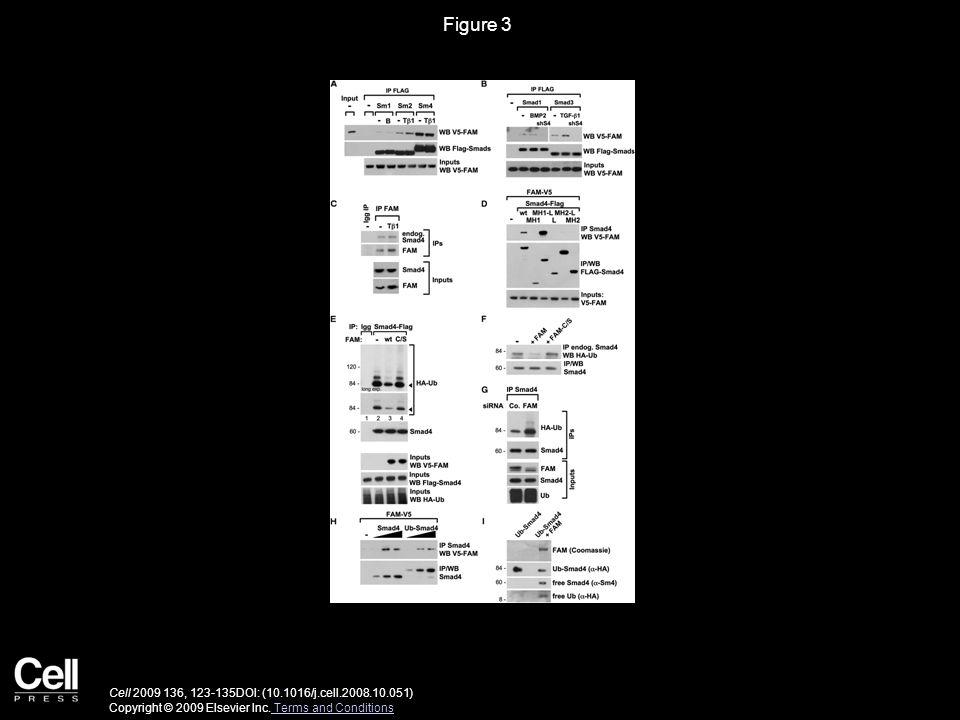 Figure 4 Cell 2009 136, 123-135DOI: (10.1016/j.cell.2008.10.051) Copyright © 2009 Elsevier Inc.