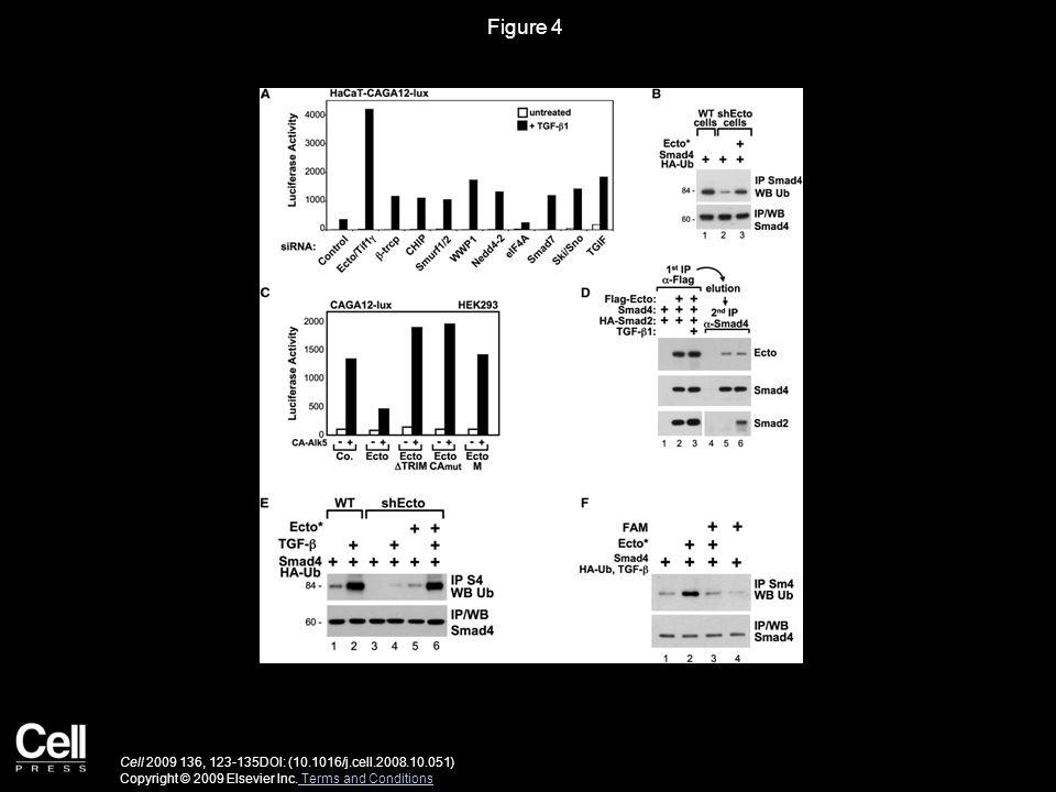 Figure 5 Cell 2009 136, 123-135DOI: (10.1016/j.cell.2008.10.051) Copyright © 2009 Elsevier Inc.