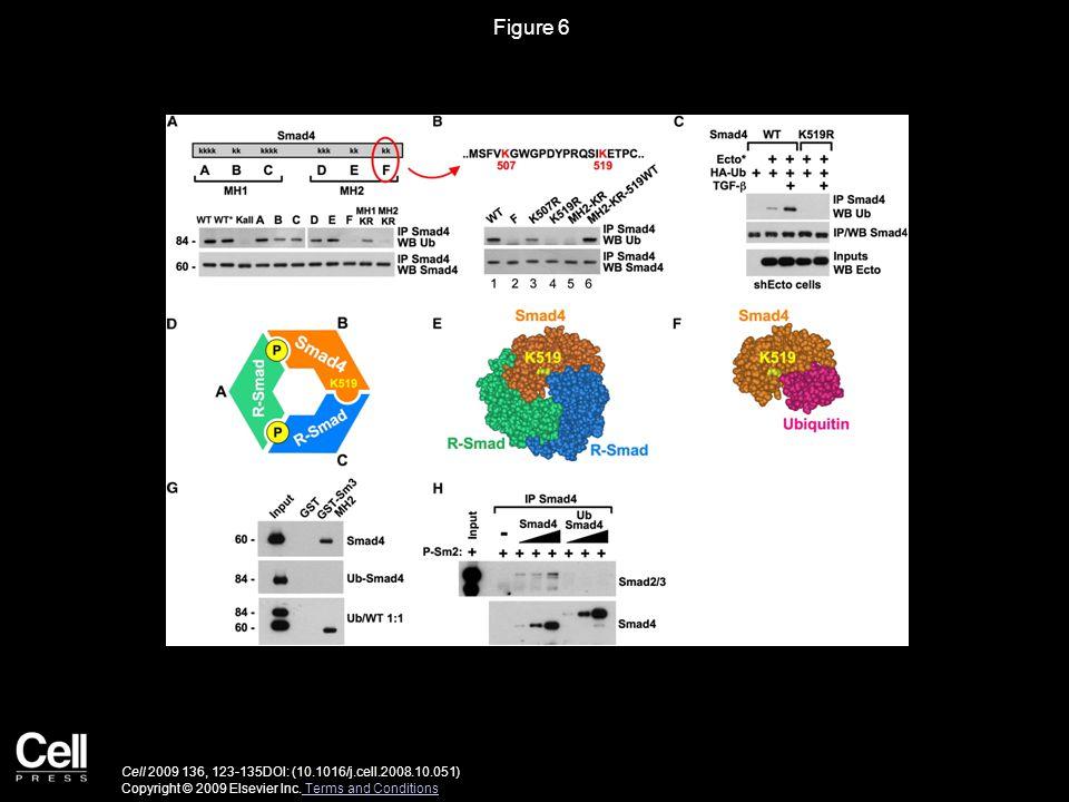 Figure 6 Cell 2009 136, 123-135DOI: (10.1016/j.cell.2008.10.051) Copyright © 2009 Elsevier Inc.