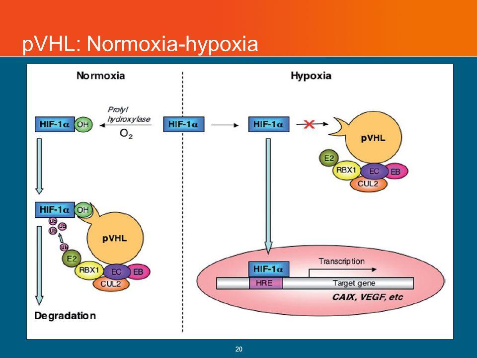 pVHL: Normoxia-hypoxia 20
