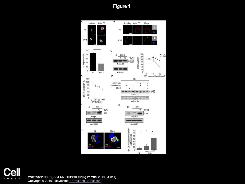Figure 2 Immunity 2010 32, 654-669DOI: (10.1016/j.immuni.2010.04.011) Copyright © 2010 Elsevier Inc.