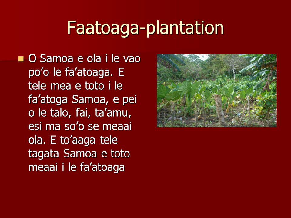 Faatoaga-plantation O Samoa e ola i le vao po'o le fa'atoaga.