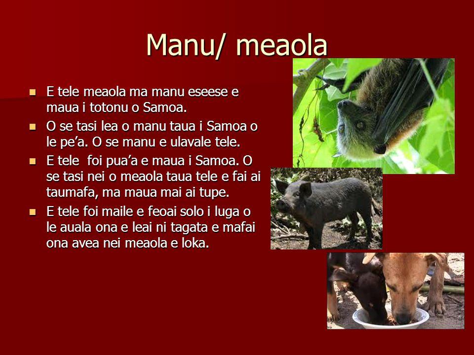Manu/ meaola E tele meaola ma manu eseese e maua i totonu o Samoa.