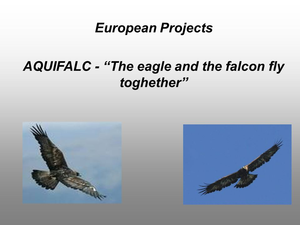 European Projects AQUIFALC - The eagle and the falcon fly toghether