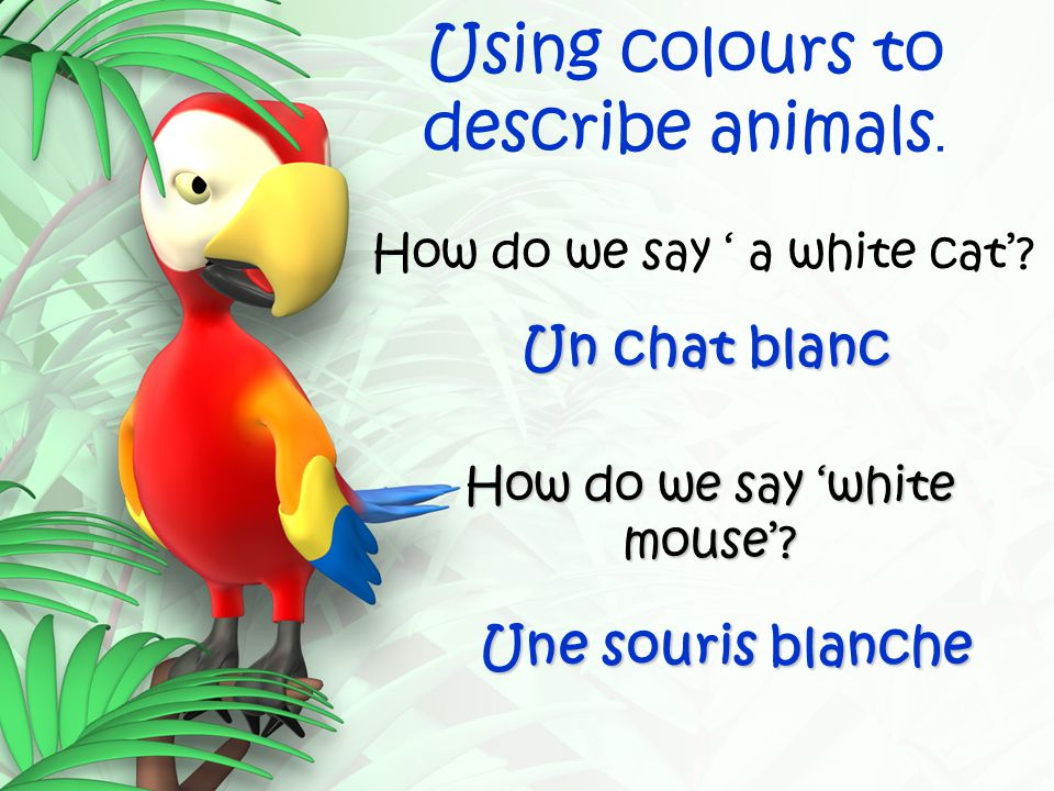 Using colours to describe animals. How do we say ' a white cat'? Un chat blanc How do we say 'white mouse'? Une souris blanche