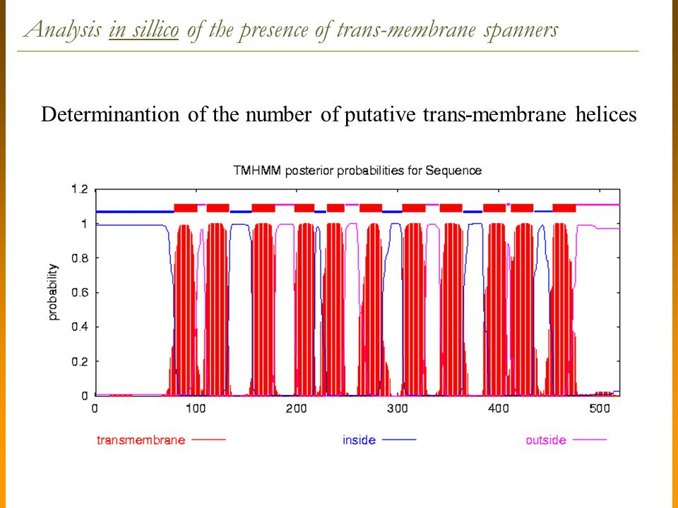 Determinantion of the number of putative trans-membrane helices Analysis in sillico of the presence of trans-membrane spanners