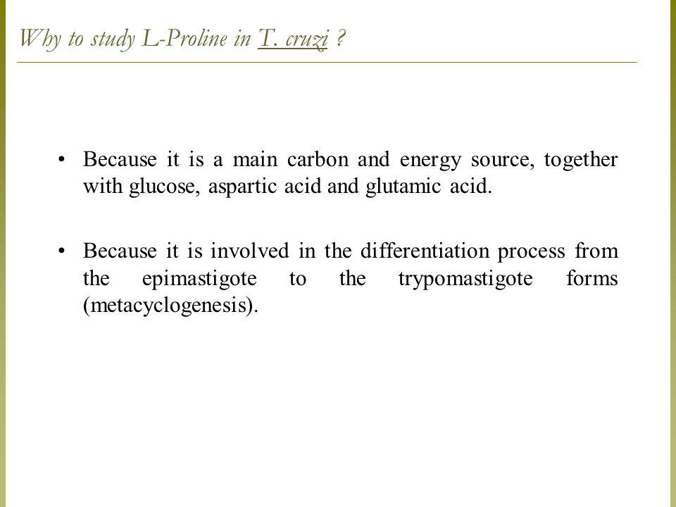 Why to study L-Proline in T. cruzi .
