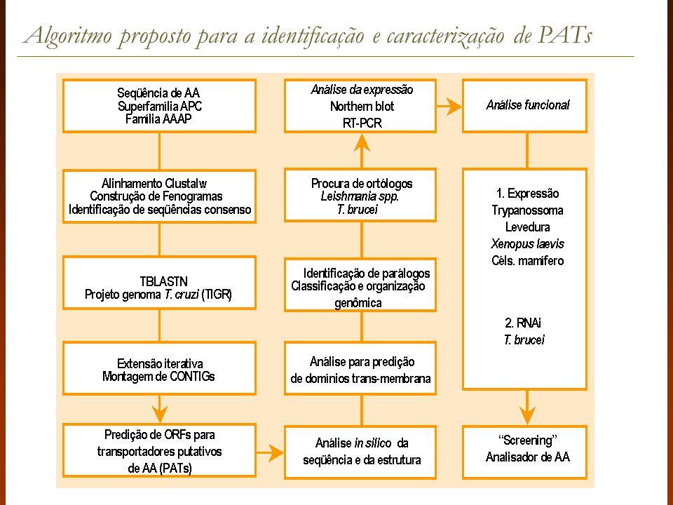 Algoritmo proposto para a identificação e caracterização de PATs