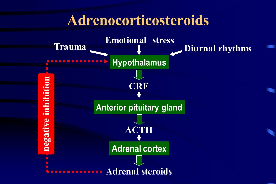 Adrenocorticosteroids Emotional stress Hypothalamus CRF Anterior pituitary gland ACTH Adrenal cortex Adrenal steroids Diurnal rhythms Trauma negative inhibition