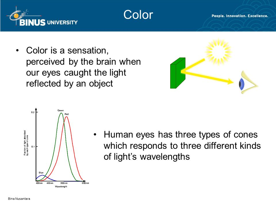 Color Color is a sensation, perceived by the brain when our eyes caught the light reflected by an object Bina Nusantara Human eyes has three types of cones which responds to three different kinds of light's wavelengths