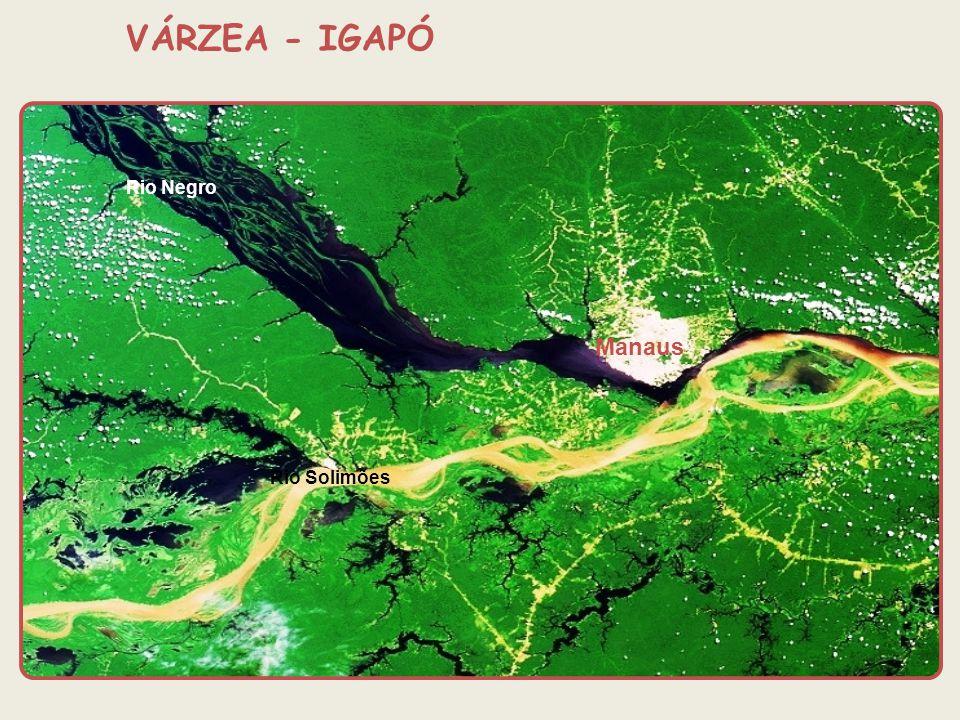 Rio Negro Rio Solimões Manaus VÁRZEA - IGAPÓ