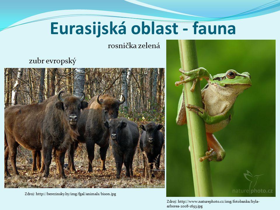 Eurasijská oblast - fauna rosnička zelená zubr evropský Zdroj: http://www.naturephoto.cz/img/fotobanka/hyla- arborea-2008-1693.jpg Zdroj: http://berezinsky.by/img/fgal/animals/bison.jpg
