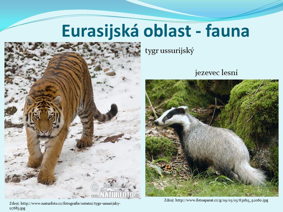 Eurasijská oblast - fauna jezevec lesní Zdroj: http://www.fotoaparat.cz/g/09/05/05/631615_92060.jpg Zdroj: http://www.naturfoto.cz/fotografie/ostatni/tygr-ussurijsky- 117683.jpg tygr ussurijský
