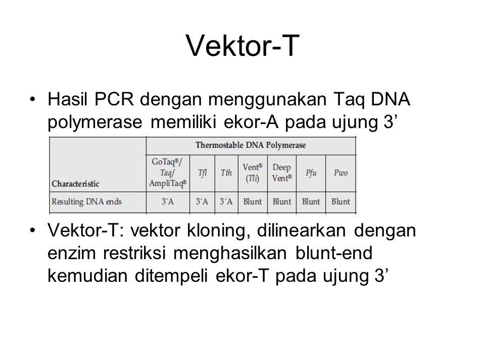 Vektor-T Hasil PCR dengan menggunakan Taq DNA polymerase memiliki ekor-A pada ujung 3' Vektor-T: vektor kloning, dilinearkan dengan enzim restriksi me