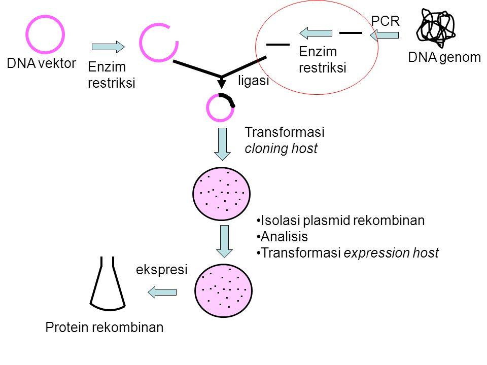 DNA genom DNA vektor ligasi Transformasi cloning host PCR Enzim restriksi........................................ Isolasi plasmid rekombinan Analisis