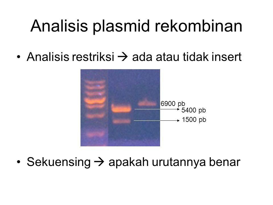 Analisis plasmid rekombinan Analisis restriksi  ada atau tidak insert Sekuensing  apakah urutannya benar 6900 pb 5400 pb 1500 pb