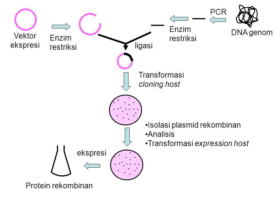 DNA genom Vektor ekspresi ligasi Transformasi cloning host PCR Enzim restriksi........................................ Isolasi plasmid rekombinan Anal