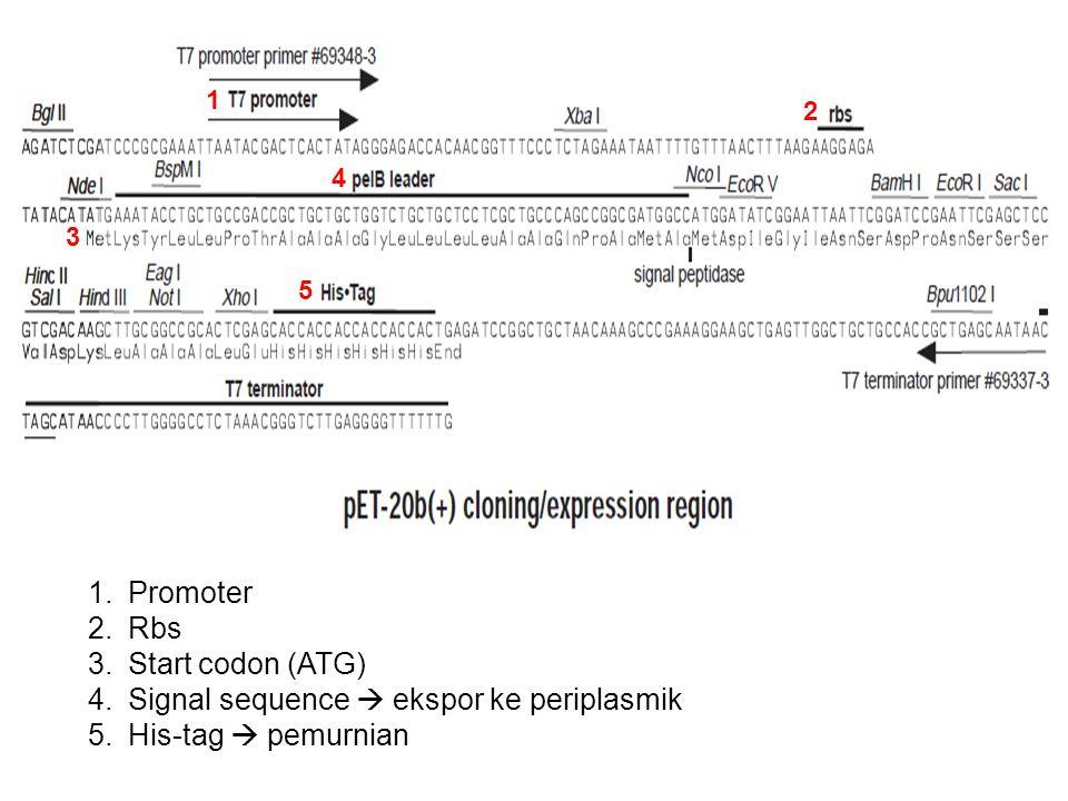 1.Promoter 2.Rbs 3.Start codon (ATG) 4.Signal sequence  ekspor ke periplasmik 5.His-tag  pemurnian 1 2 3 4 5