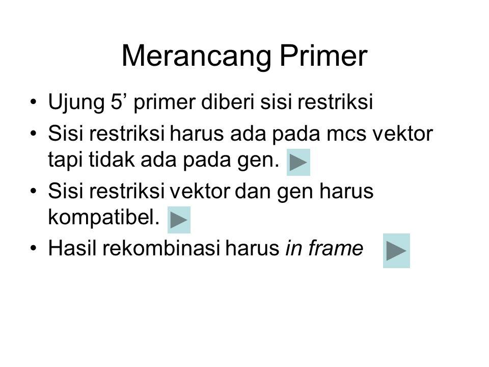 Merancang Primer Ujung 5' primer diberi sisi restriksi Sisi restriksi harus ada pada mcs vektor tapi tidak ada pada gen. Sisi restriksi vektor dan gen