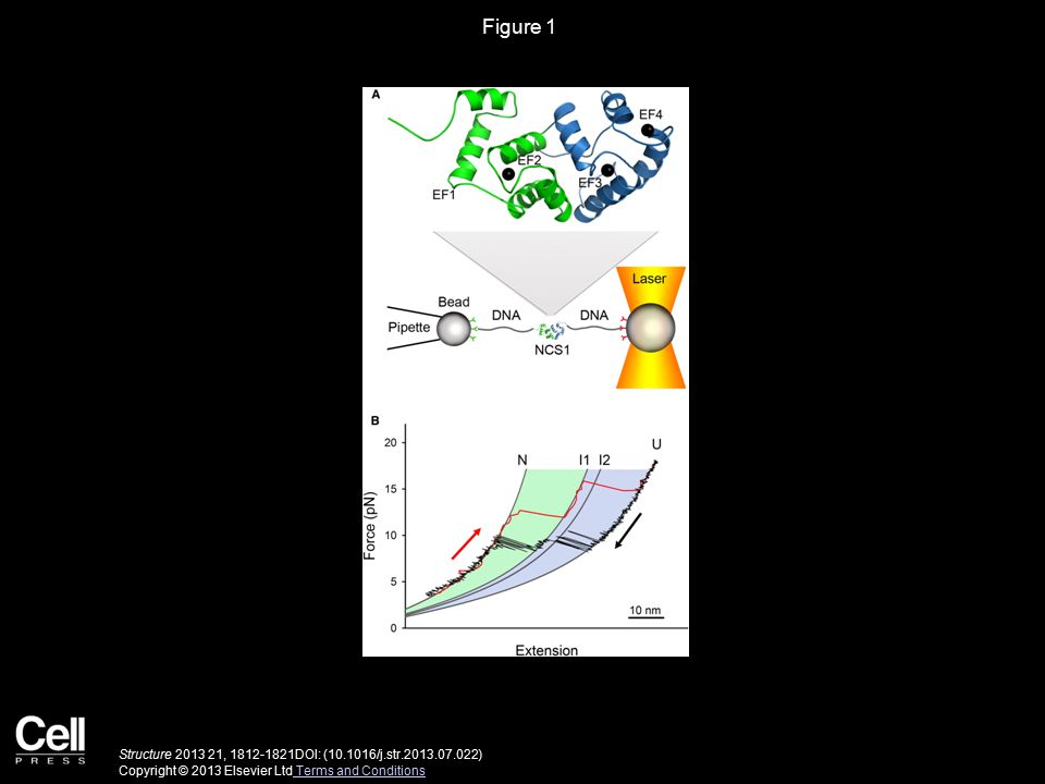 Figure 1 Structure 2013 21, 1812-1821DOI: (10.1016/j.str.2013.07.022) Copyright © 2013 Elsevier Ltd Terms and Conditions Terms and Conditions