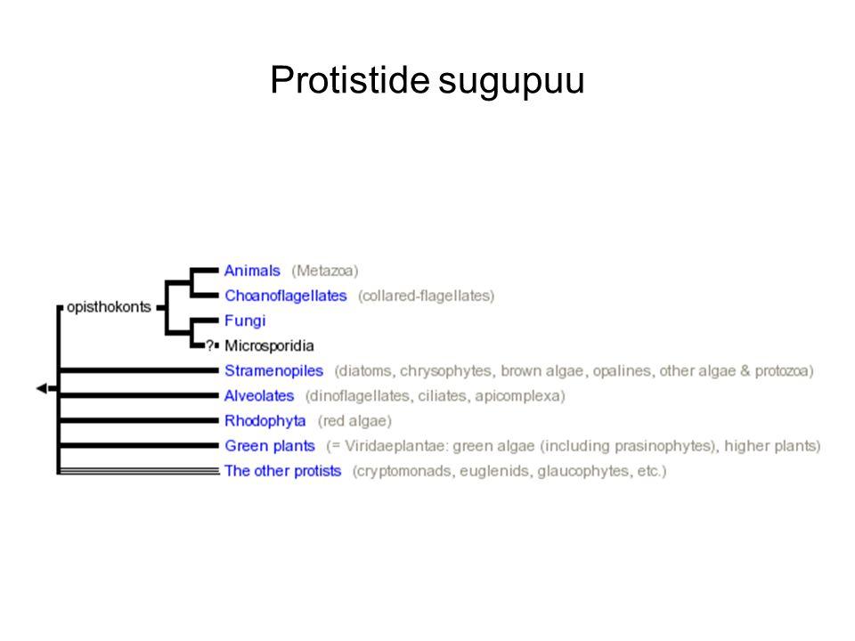 Protistide sugupuu