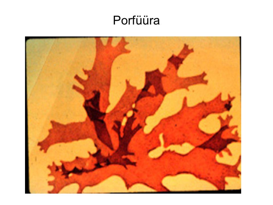 Porfüüra