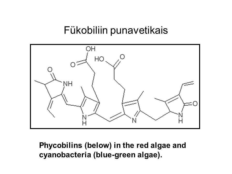 Fükobiliin punavetikais Phycobilins (below) in the red algae and cyanobacteria (blue-green algae).